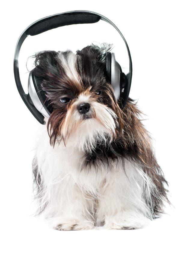 Hond die aan muziek luistert stock fotografie