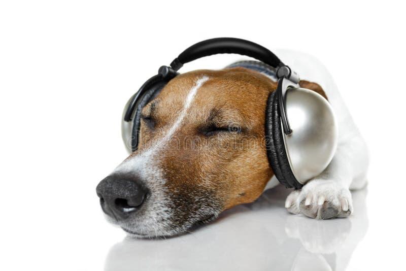 Hond die aan muziek luistert royalty-vrije stock afbeeldingen