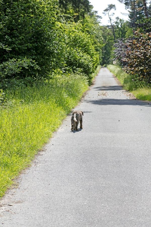 Hond die alleen op van de wegvrede beste kwaliteit als achtergrond lopen royalty-vrije stock fotografie