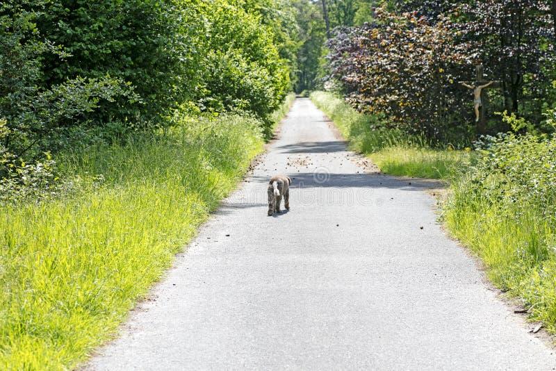 Hond die alleen op van de wegvrede beste kwaliteit als achtergrond lopen stock afbeeldingen