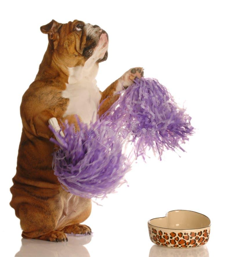 Hond die bedelt worden gevoed royalty-vrije stock foto's