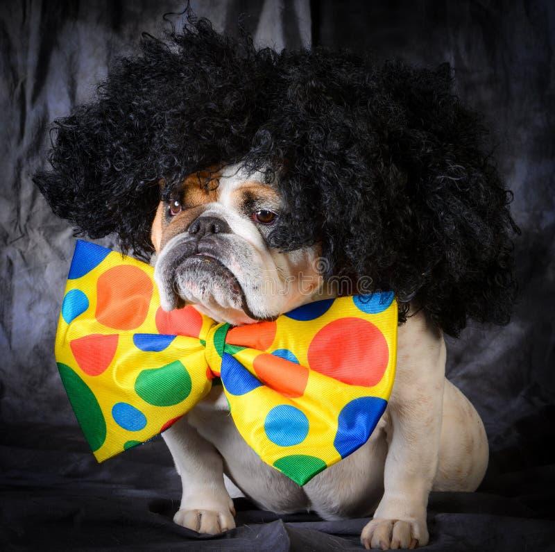 hond die clownkostuum dragen royalty-vrije stock afbeelding