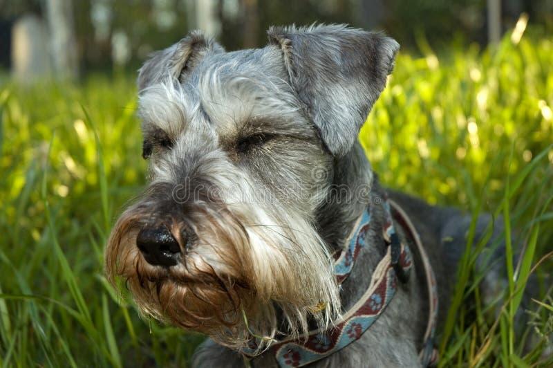 Hond die in de zon rust royalty-vrije stock fotografie