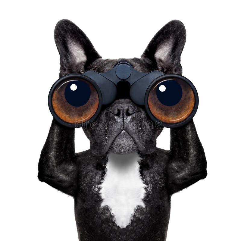 Hond die door verrekijkers kijken stock foto's