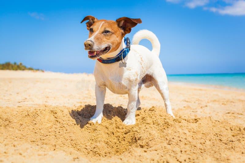 Hond die een gat graven stock fotografie