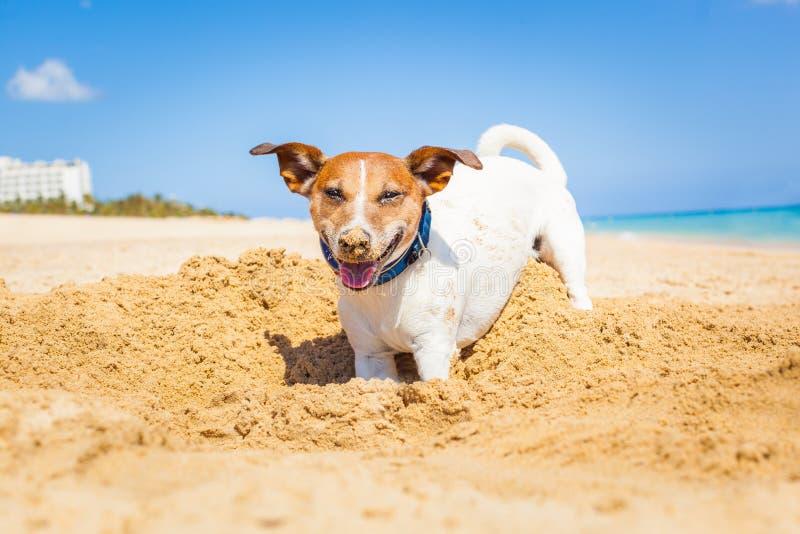 Hond die een gat graven royalty-vrije stock foto
