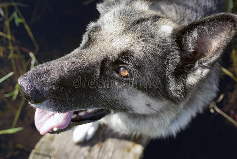 Hond die Gelukkig kijken royalty-vrije stock foto's
