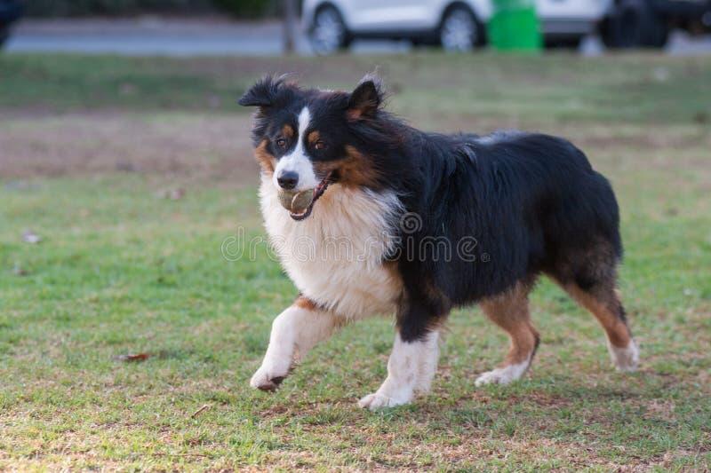 Hond die gelukkige uitdrukking tonen royalty-vrije stock foto's