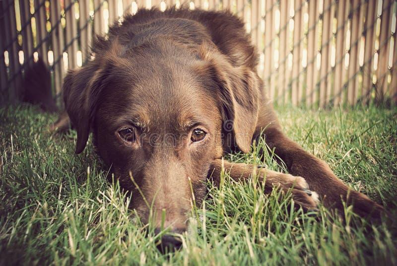 Hond die in Gras legt royalty-vrije stock foto