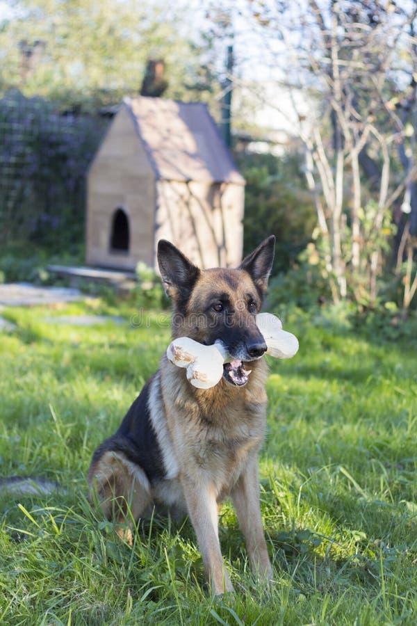 Hond die groot been in mond houden royalty-vrije stock afbeelding