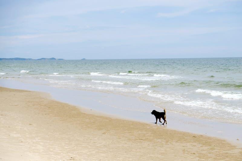 Hond die het zandstrand lopen stock foto's