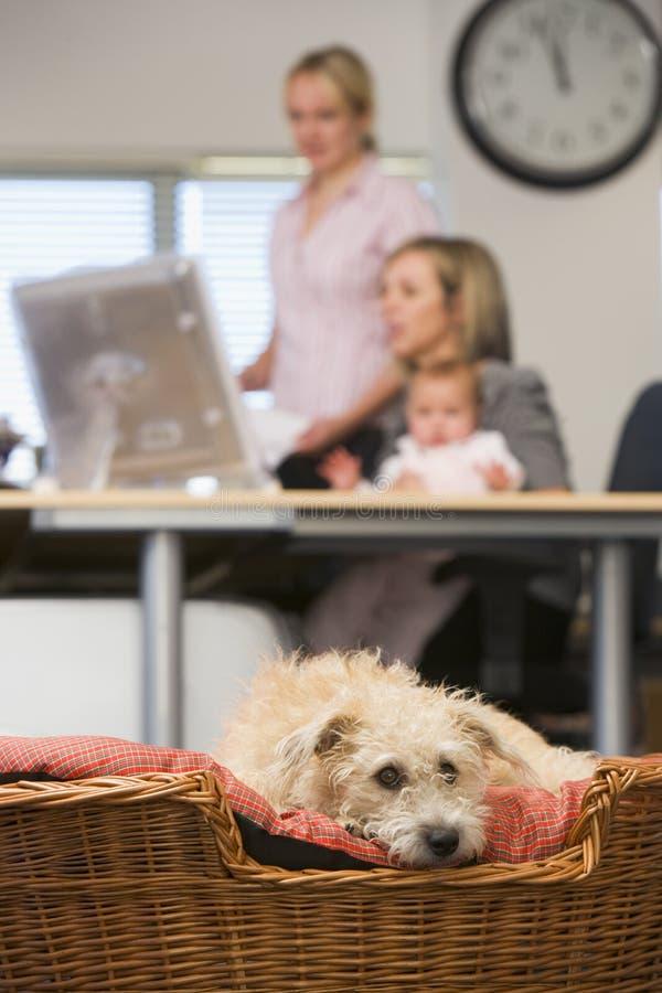 Hond die in huisbureau ligt met twee vrouwen en een baby royalty-vrije stock afbeelding