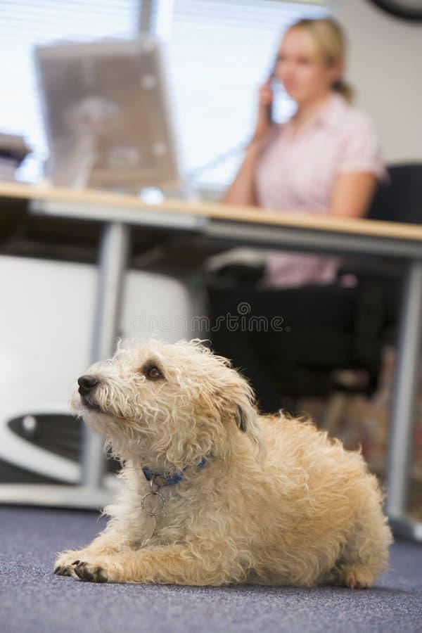 Hond die in huisbureau ligt met vrouw op achtergrond stock afbeelding