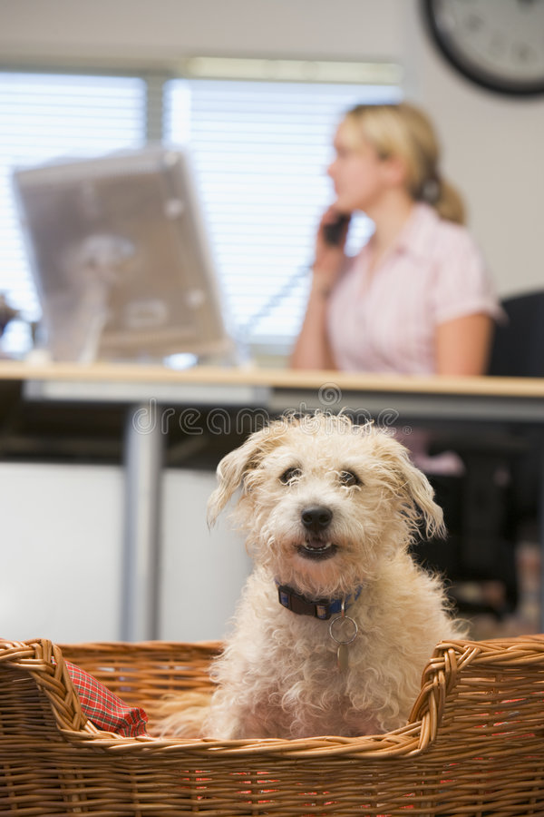 Hond die in huisbureau ligt met vrouw op achtergrond royalty-vrije stock foto's