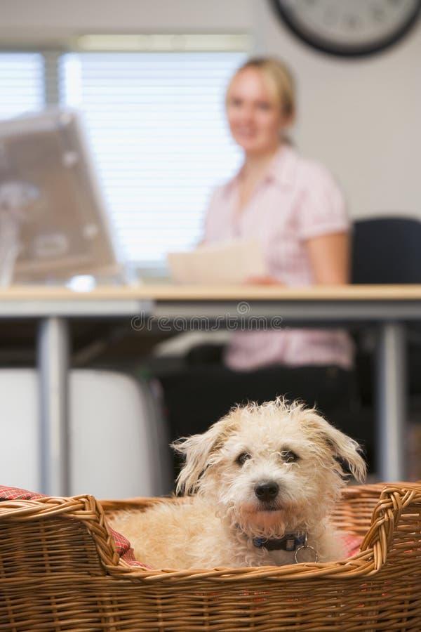 Hond die in huisbureau ligt met vrouw op achtergrond royalty-vrije stock fotografie