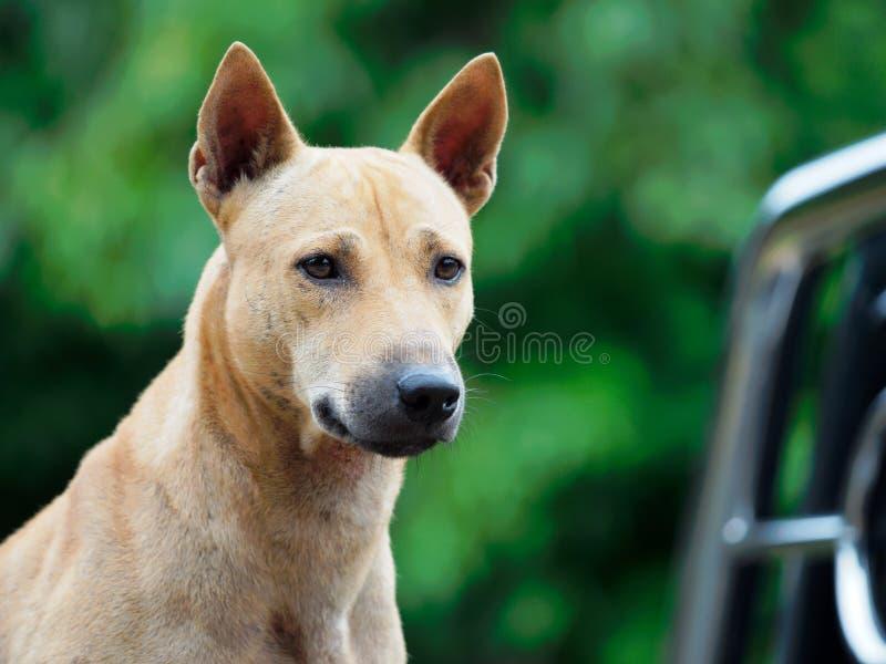 Hond die iets kijken stock foto's