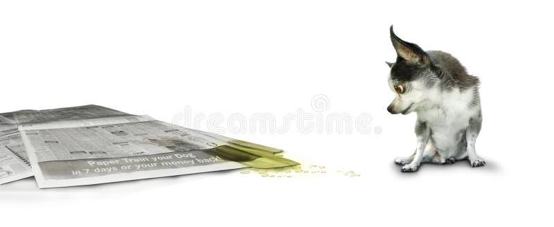 Hond die onbenullig document bekijkt stock foto