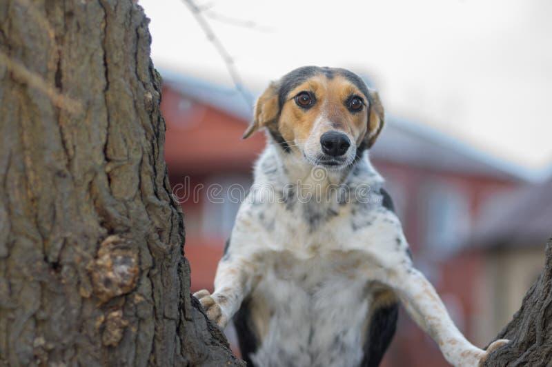 Hond die die ongeveer in verbazing die met wijd open ogen kijken zich op boomtak bevinden stock afbeelding