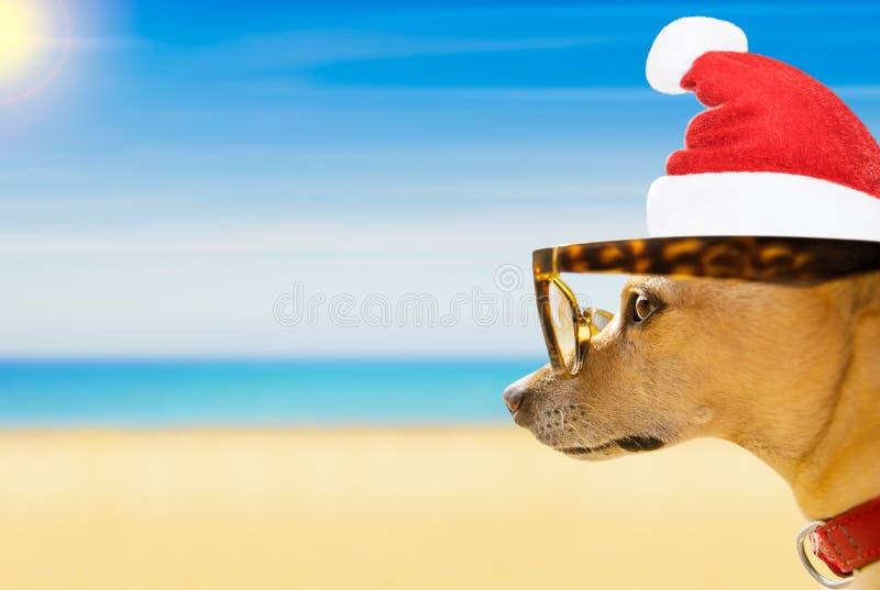 Hond die op het strand op de vakantie van de zomerkerstmis letten royalty-vrije stock foto