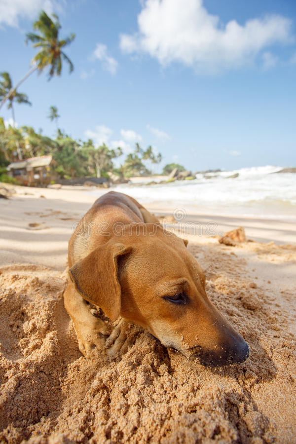 Hond die op het zand liggen royalty-vrije stock afbeelding