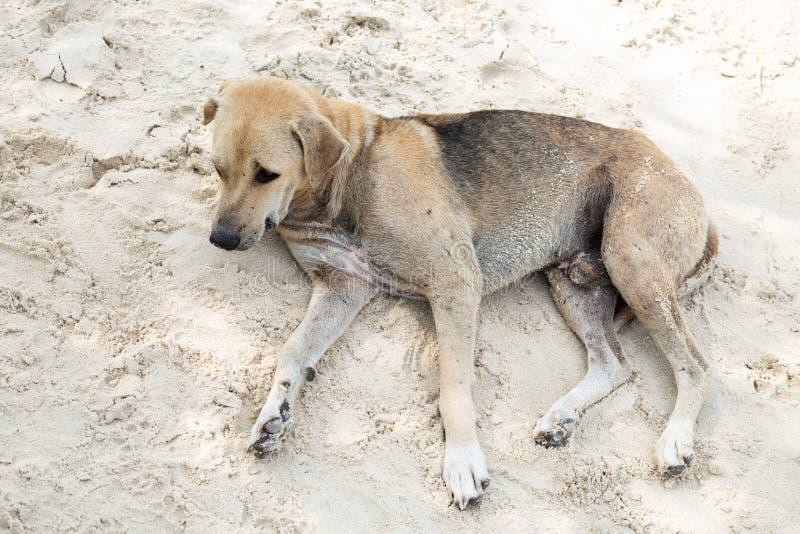 Hond die op het zand liggen stock afbeelding