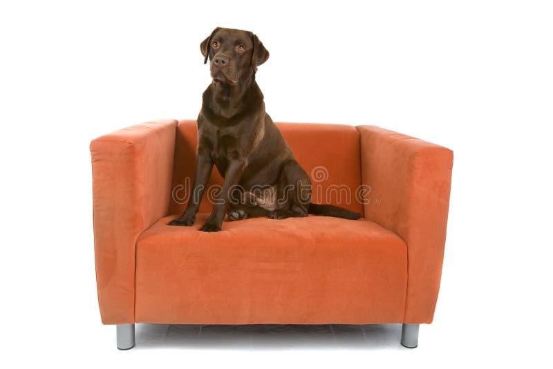 Hond die op stoel wordt gezeten royalty-vrije stock foto