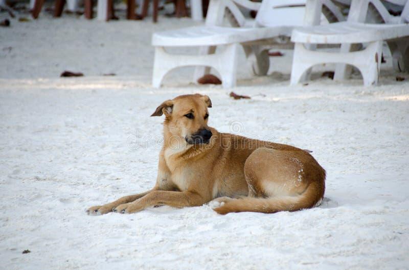 Hond die op zand bij het strand met droevige ogen liggen slechte eenzaamheidhond royalty-vrije stock afbeeldingen