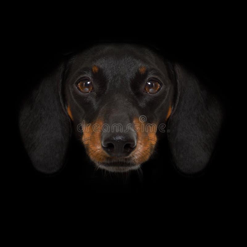 Hond die op Zwarte wordt geïsoleerd stock foto