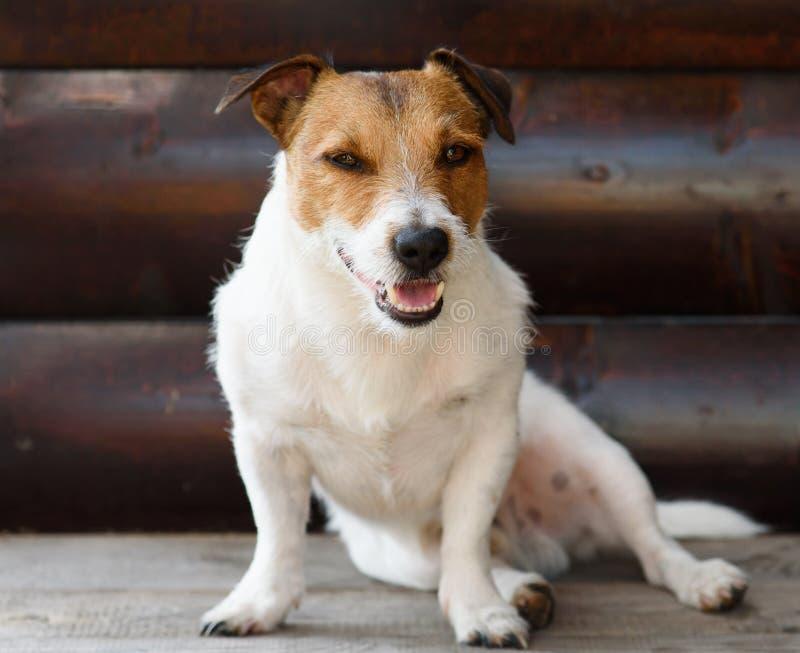 Hond die rust hebben bij schaduw van houten portiek bij hete de zomerdag stock afbeelding