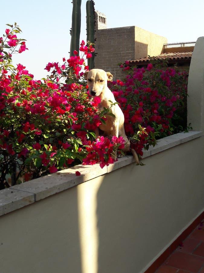 Hond die strook van zonlicht op een koude ochtend zoeken stock foto's