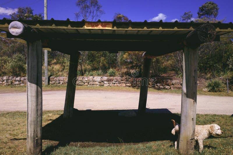 Hond die tegen Pool van de Houten Parkeerplaats van de Zonschuilplaats urineren royalty-vrije stock fotografie