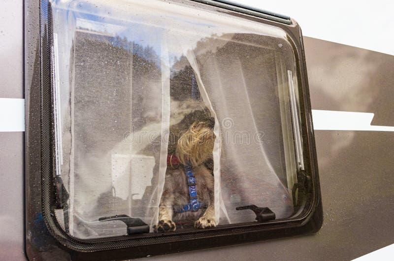 Hond die uit het venster van een caravan kijken royalty-vrije stock fotografie