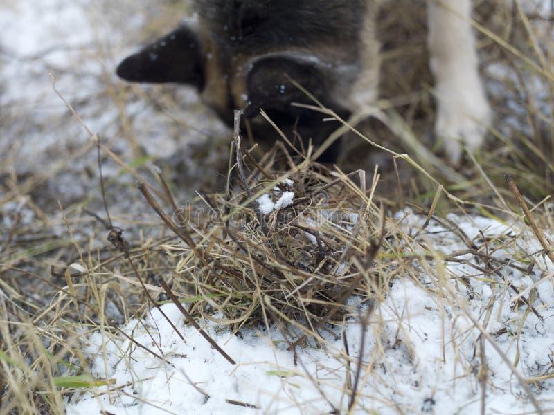 Hond die uit snuiven stock afbeelding