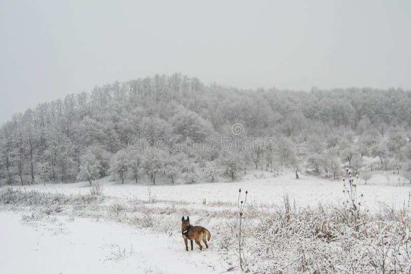Hond die van de de winterstilte genieten stock foto's