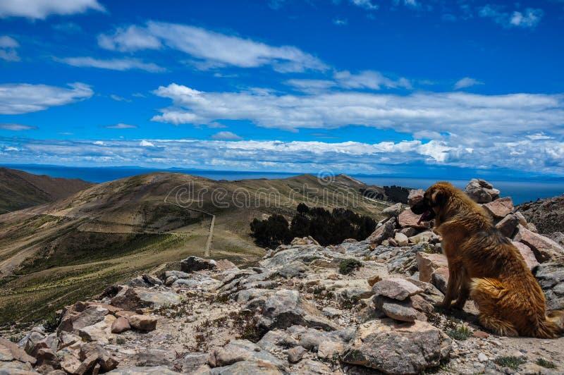 Hond die van Schitterend Landschap van Isla del Sol, Bolivië genieten royalty-vrije stock afbeeldingen