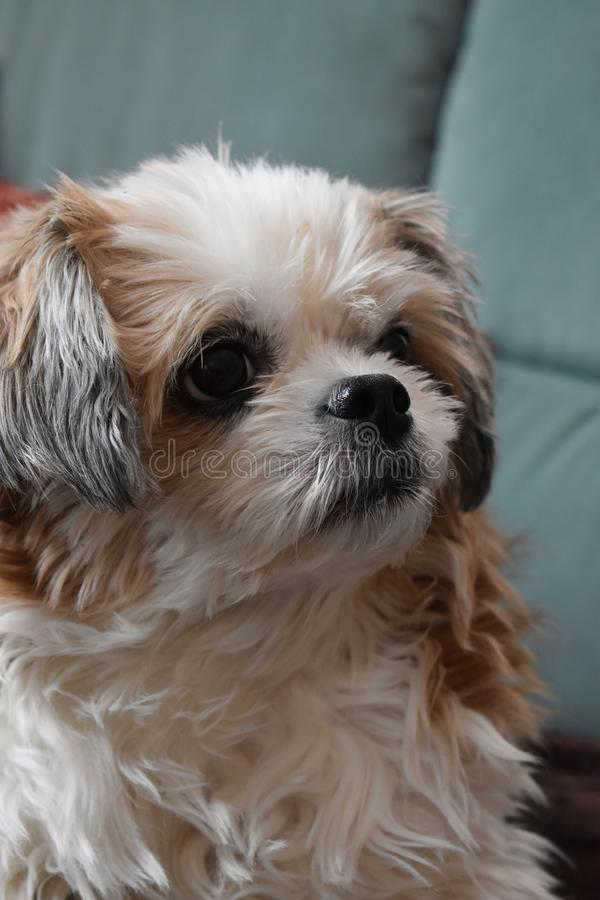 Hond die voedsel zoeken royalty-vrije stock afbeelding