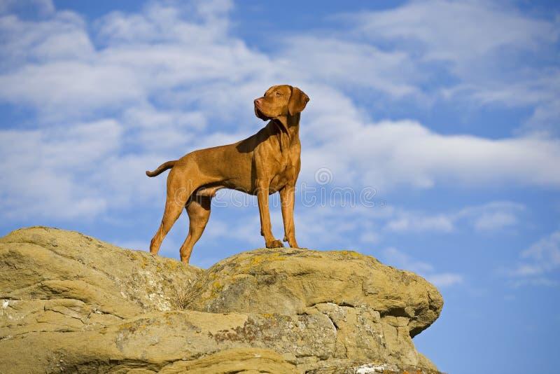 Hond die zich op klip bevindt stock afbeeldingen