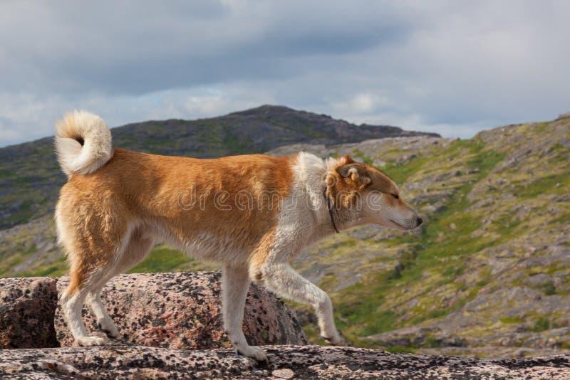 Hond die zich op rotsen bevinden royalty-vrije stock foto's