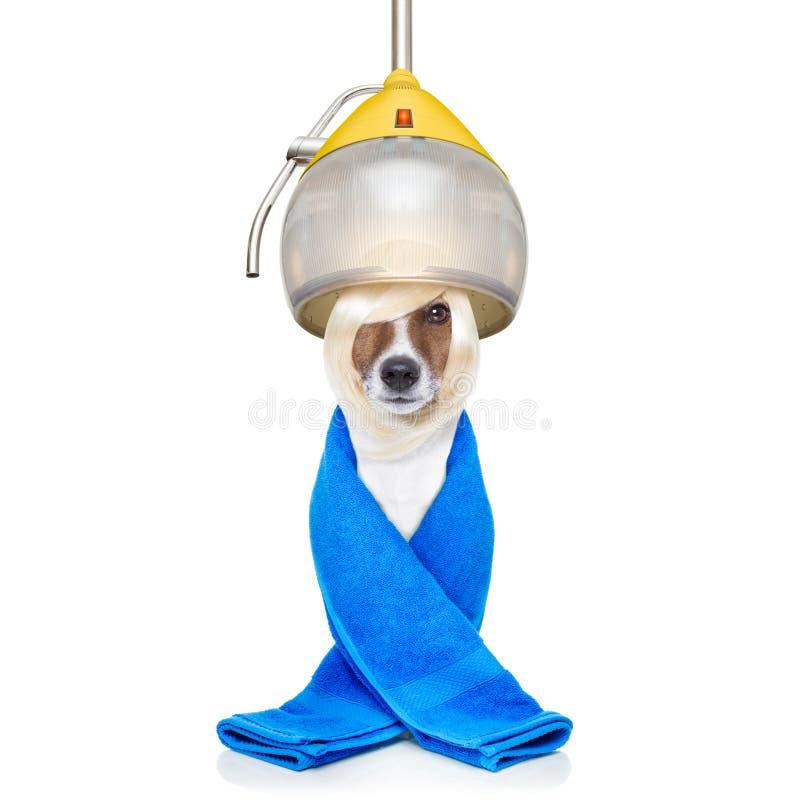 Hond drogend haar bij kappers stock afbeelding