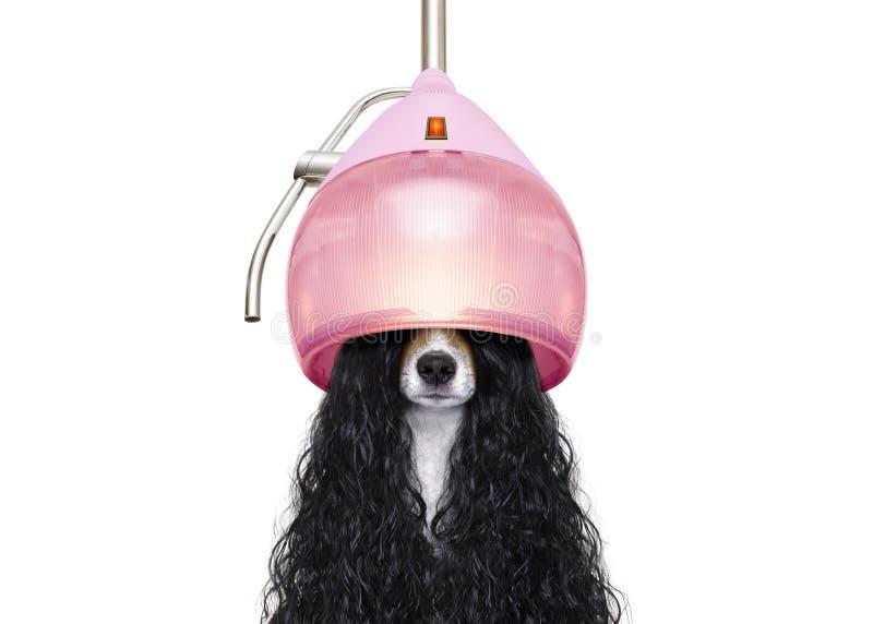 Hond drogend haar bij kappers royalty-vrije stock afbeeldingen