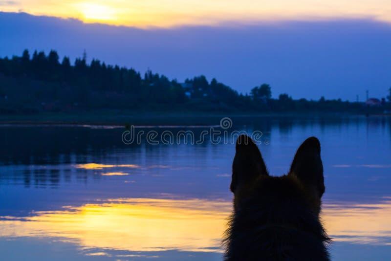 Hond Duitse herder op de kust van het meer royalty-vrije stock afbeelding
