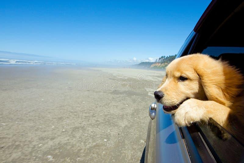 Hond in een autoraam