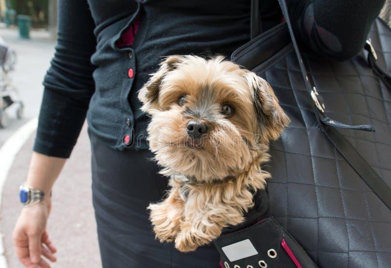 Hond in een handtas stock fotografie