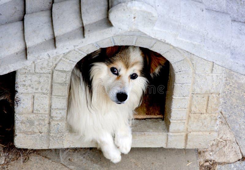 Hond in een kennel royalty-vrije stock afbeeldingen