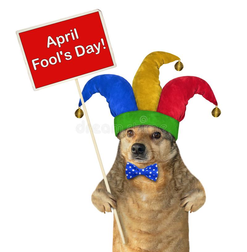 Hond in een narrenhoed met een teken royalty-vrije stock afbeelding