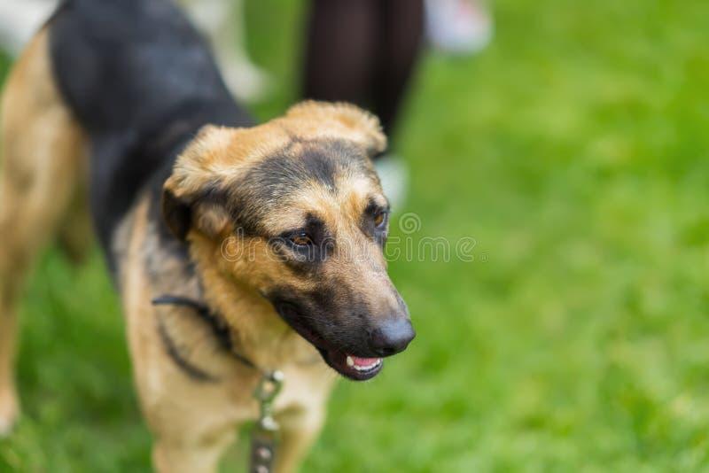Hond in een schuilplaats met droevige ogen die van hoop, wachten worden goedgekeurd Concept sociaal probleem van dakloze dieren M stock afbeeldingen