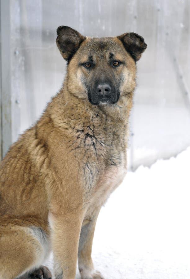 Hond in een schuilplaats van dakloze dieren. stock fotografie