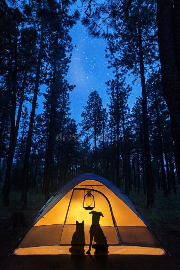 Hond en Cat Camping Under Stars stock fotografie