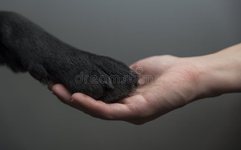 Hond en een menselijke holdingshanden stock afbeelding