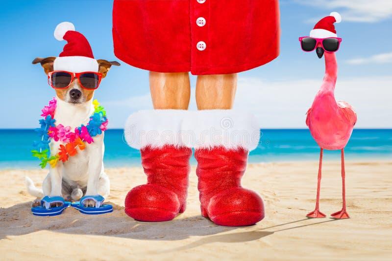 Hond en eigenaar als Kerstman op Kerstmis bij het strand royalty-vrije stock afbeelding